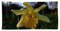 Yellow Daffodils 5 Bath Towel by Jean Bernard Roussilhe