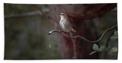 Yellow-rumped Warbler At Water Spout Hand Towel