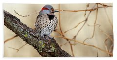 Yellow-shafted Northern Flicker Hand Towel