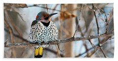 Yellow-shafted Northern Flicker Staying Warm Bath Towel