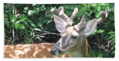Bath Towel featuring the photograph Young Buck Outside My Kitchen Window  by Betty Pieper