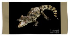 Young Cayman Crocodile, Reptile With Opened Mouth And Waved Tail Isolated On Black Background In Top Hand Towel by Sergey Taran