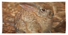 Young Cottontail In The Morning Bath Towel