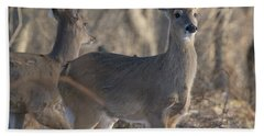 Young Deer In A Pack Hand Towel