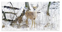 Young Doe And Spring Snow Hand Towel
