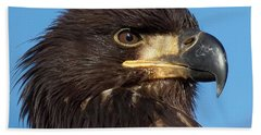 Young Eagle Head Bath Towel by Sheldon Bilsker