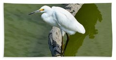 Young Egret Resting Hand Towel by Kathy Eickenberg