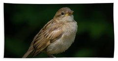 Young House Sparrow Hand Towel