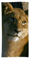 Young Lion Hand Towel