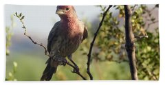 Young Male House Finch Hand Towel