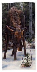 Young Moose And Pussy Willows Springtime In Alaska Wildlife Painting Hand Towel