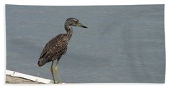 Young Night Heron Hand Towel