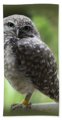 Young Snowy Owl Hand Towel