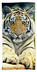 Young Tiger Hand Towel