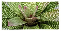 Zebra Bromeliad Hand Towel by Venetia Featherstone-Witty