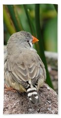 Zebra Finch Bath Towel
