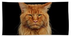 Angry Ginger Maine Coon Cat Gazing On Black Background Bath Towel