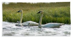 Arctic Tundra Swans And Cygnets Hand Towel