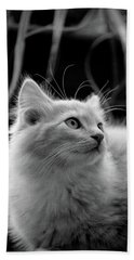 Intrigued Cat Photography Hand Towel