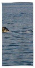 Pacific Harbor Seal Bath Towel