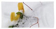 Winter Aconite Flowering In The Snow Bath Towel