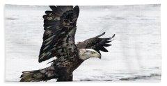 Young Bald Eagle Hand Towel