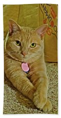 2018 Sunny Cat Listening To Year's End Political Analysis Hand Towel