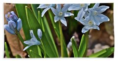 2019 Early April Striped Squill Hand Towel