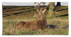 28/11/18  Tatton Park. Stag In The Park. Hand Towel