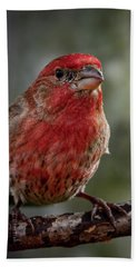 Hand Towel featuring the photograph Finch by Allin Sorenson
