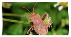 Leaf Footed Bug Hand Towel
