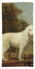 White Poodle In A Punt Hand Towel