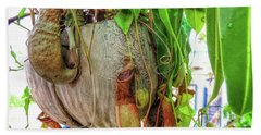 A Pitcher Plant On Our Terrace In Thailand Hand Towel