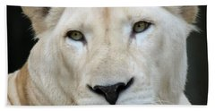 A Portrait Of A White Southern African Lion Female Hand Towel