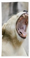 A Portrait Of A White Southern African Lion Female Roaring Hand Towel