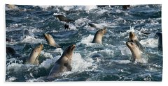 A Raft Of Sea Lions Bath Towel