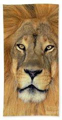 African Lion Portrait Wildlife Rescue Hand Towel