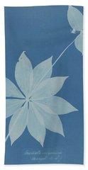 Anna Atkins 1799  1871  Mediola Arginica  Bangor  U  S ' Hand Towel