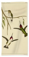 Atthis Costae Hand Towel