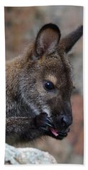 Baby Wallaby Cleaning Himself Bath Towel