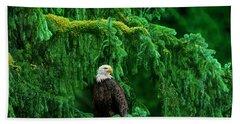 Bald Eagle In Temperate Rainforest Alaska Endangered Species Hand Towel