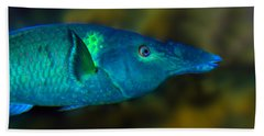Bird Wrasse Bath Towel