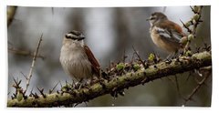 Black-crowned Tchagra And White-browed Scrub-robin Hand Towel