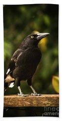 Black Currawong Bird Hand Towel
