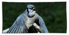 Blue Jay Bath Towel