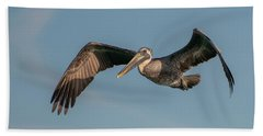 Brown Pelican In Flight Bath Towel