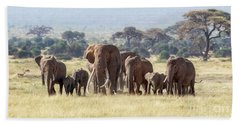 Bull Elephant With A Herd Of Females And Babies In Amboseli, Kenya Hand Towel