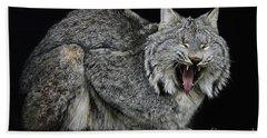 Canadian Lynx Hand Towel