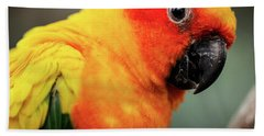 Close Up Of A Sun Conure Parrot. Bath Towel