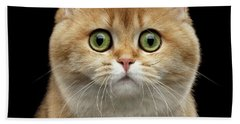 Close-up Portrait Of Golden British Cat With Green Eyes Bath Towel